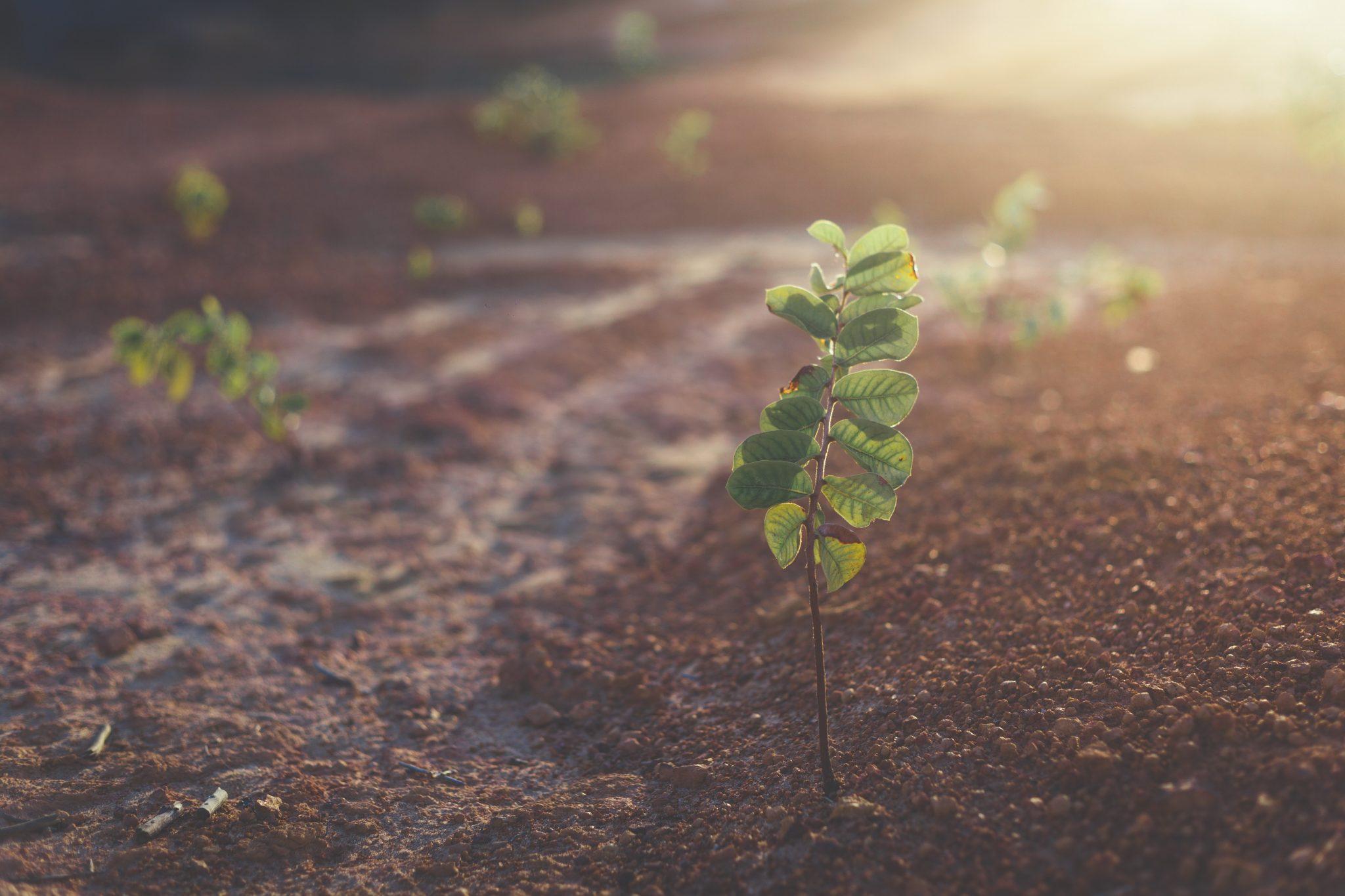 Plantjes komen uit de grond