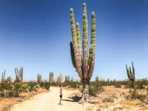 Man bij grote cactus